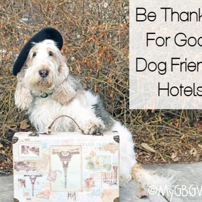Be Thankful For Good Dog Friendly Hotels