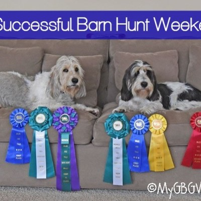 2 RATN Titles – A Successful Barn Hunt Weekend!