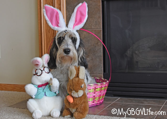 My GBGV Life When The Easter Bunny Goes Bad
