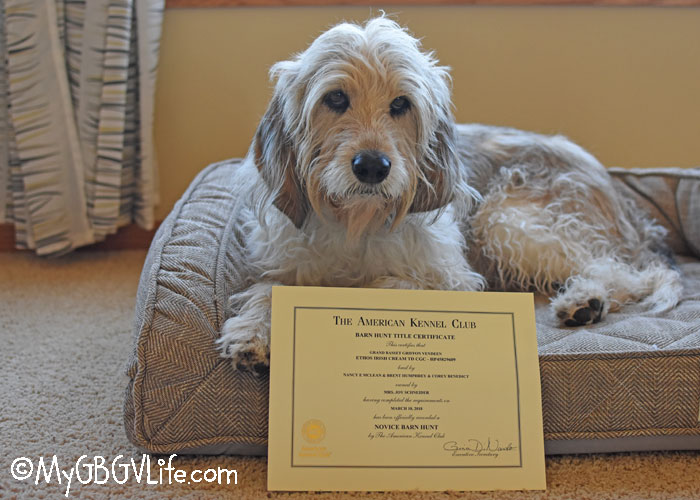 My GBGV Life Achiever Dog And RATN Titles