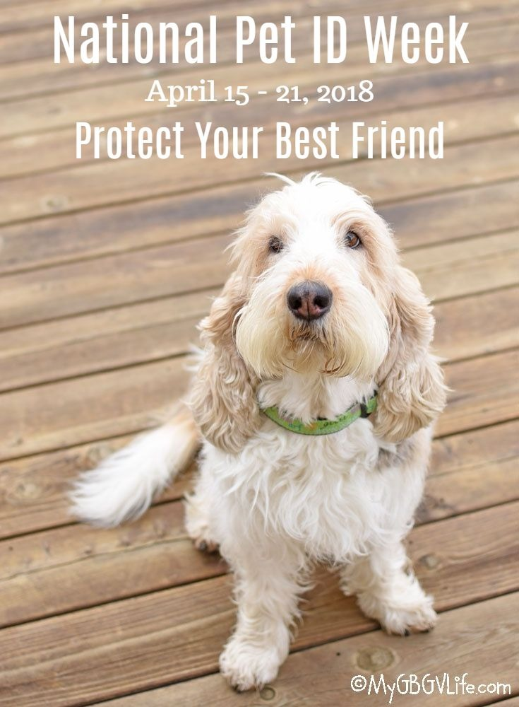 My GBGV Life National Pet ID Week - Protect Your Best Friend