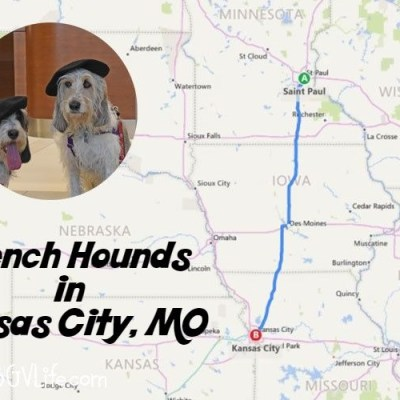 The French Hounds Hit Kansas City For BlogPaws 2018