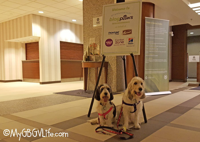 My GBGV Life Wordless Wednesday From BlogPaws In Kansas City