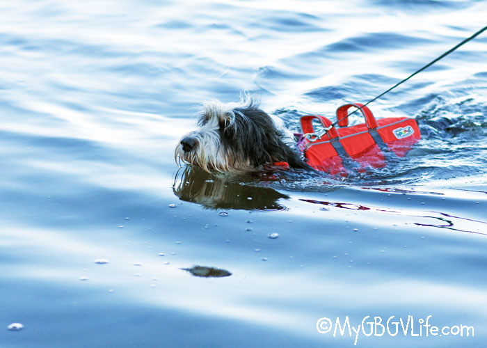 My GBGV Life Keep Your Pup Safe In The Water With A Dog Life Jacket
