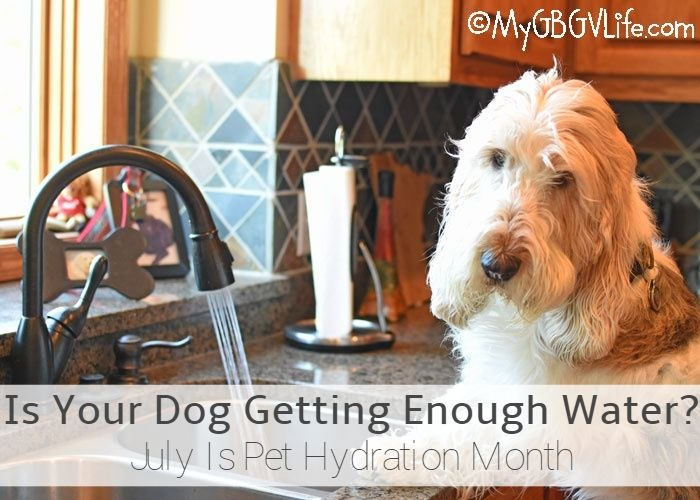 My GBGV Life A Dripping Wet Beard Is A Good Thing! Pet Hydration Month