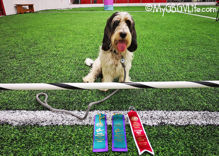 My GBGV Life Madison Begins Her Agility Career With Success