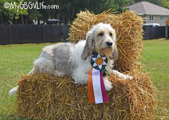 My GBGV Life A Dog Sports Road Trip - Part 2 Sheboygan, WI