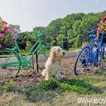 Bicycle Flowers In Northfield