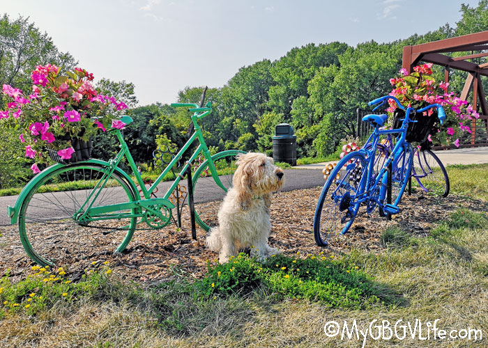 My GBGV Life Bicycle Flowers In Northfield