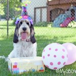 Surprise Your Pup With A Birthday Goody Box #ChewyInfluencer