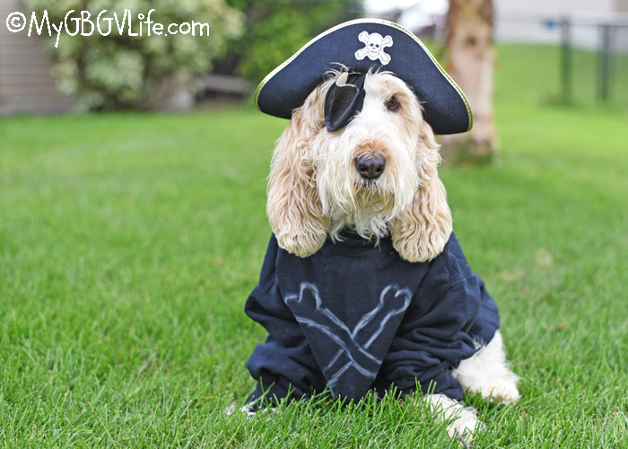 My GBGV Life Ahoy Matey, It's Like A Pirate Day!