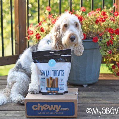 Tasty All Natural Dental Chews For Your Dog – #ChewyInfluencer