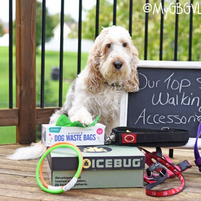 Our Top 5 Walking Accessories – For Dogs And Their Humans