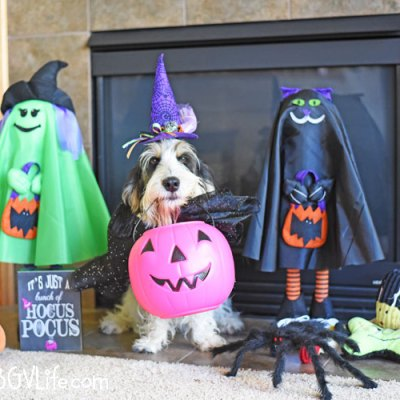 Looks Like Madison Is Ready For Tricks And Treats!