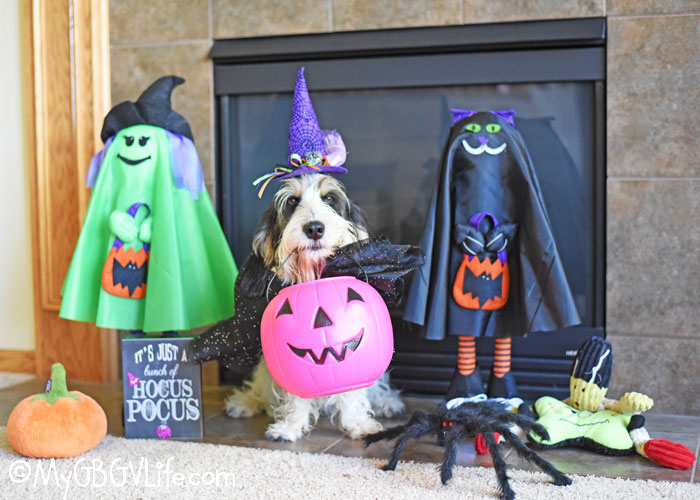 My GBGV Life Looks Like Madison Is Ready For Tricks And Treats!