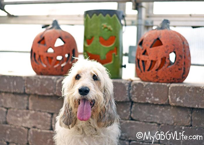 My GBGV Life Bailie Hits Pahls Halloween Market