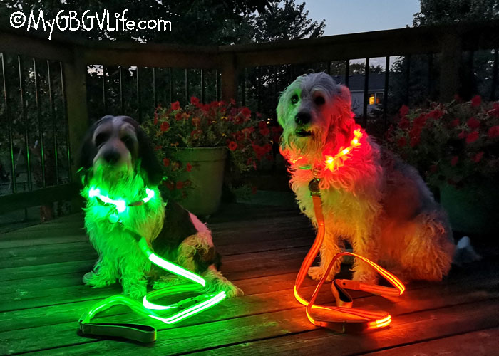 My GBGV Life End Dog Walking Fright Nights With LED Lights