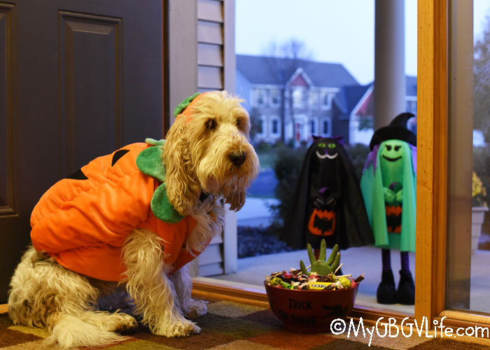 My GBGV Life 7 Tips To Keep Your Dog Safe During Halloween Season