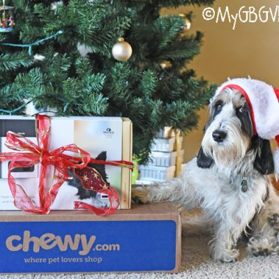 Give Your Dog The Gift Of Petcube Bites #ChewyInfluencer