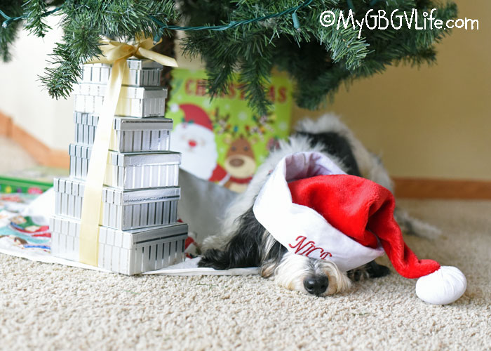 My GBGV Life Holiday Decorating Can Really Be Exhausting For A Hound