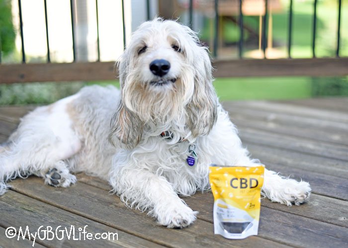My GBGV Life CBD Pet Chews Reduce Your Dog's Anxiety