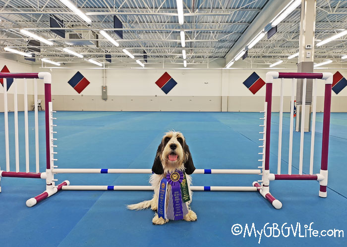 My GBGV Life Eleven Weekends Of Dog Sports - Results And Conclusions