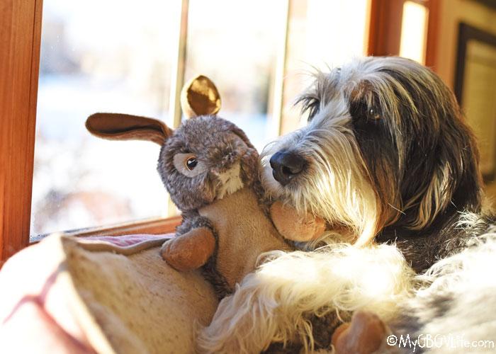 My GBGV Life Storytelling Warmth – Photo Challenge #DogwoodWeek4