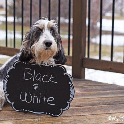 Inspiration Black And White – Photo Challenge #DogwoodWeek3