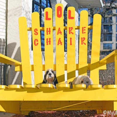 An Adirondack Share Chair, LOL!
