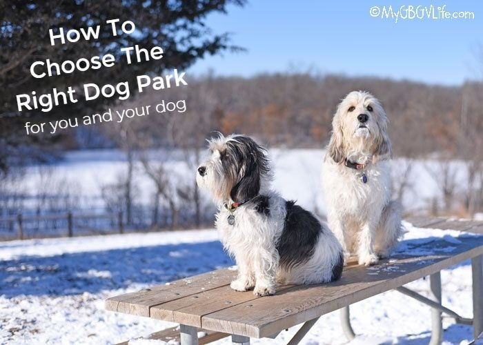 How To Choose The Right Dog Park For You And Your Dog