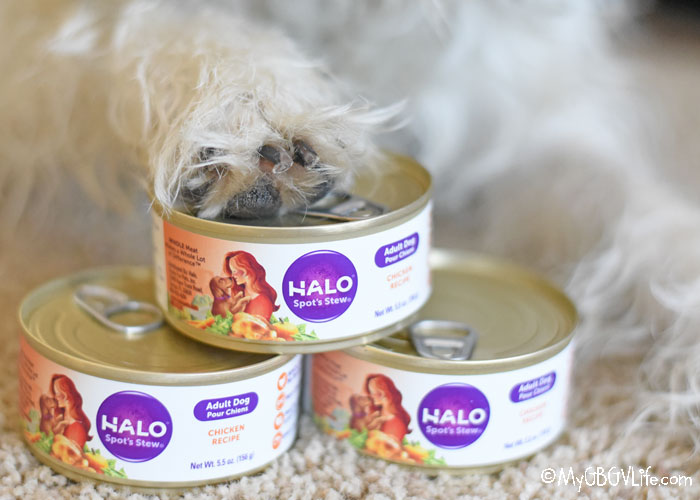 My GBGV LIfe 3 Ways For Dogs To Enjoy Chicken Dinner In A Can #HaloPets