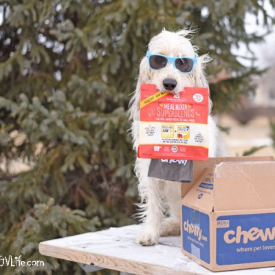 3 Ways To Serve Your Dog Meal Mixers #ChewyInfluencer