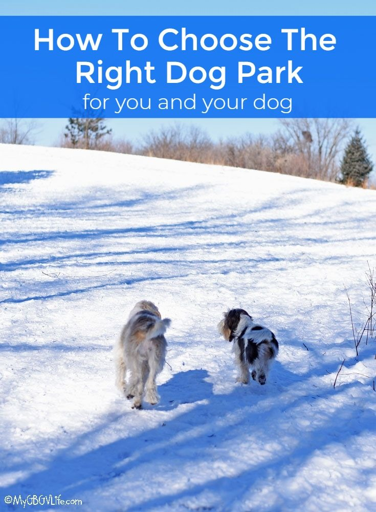 My GBGV Life How To Choose The Right Dog Park For You And Your Dog