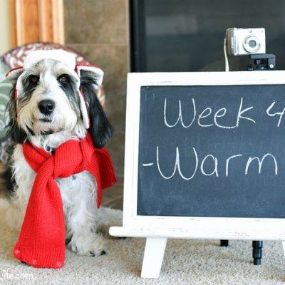 Storytelling Warmth – Photo Challenge #DogwoodWeek4