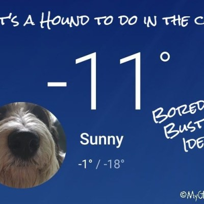 Healthy Winter Boredom Buster For Your Dog #ChewyInfluencer