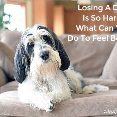 Losing A Dog Is So Hard! What Can You Do To Feel Better?