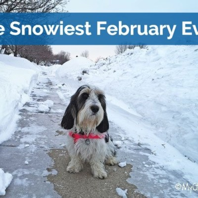 My GBGV Life The Snowiest February Ever On Record