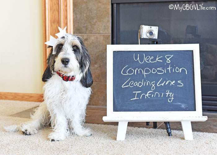 My GBGV Life Composition - Leading Lines To Infinity #DogwoodWeek8