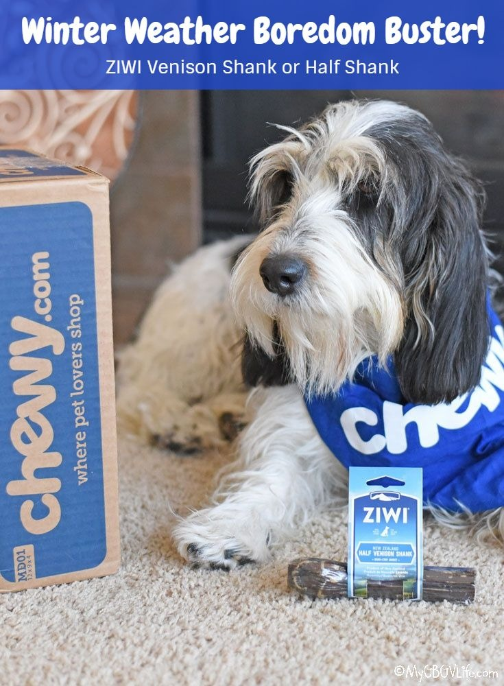 My GBGV Life Healthy Winter Boredom Buster For Your Dog #ChewyInfluencer