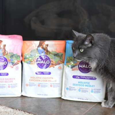 Halo Cat Food Has Sophie Purring Loudly