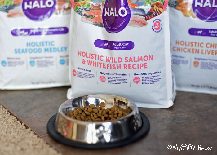 My GBGV Life Halo Cat Food Has Sophie Purring Loudly