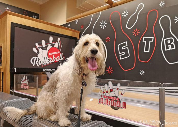 My GBGV Life Dog Friendly Shopping At Scheels In Sioux Falls