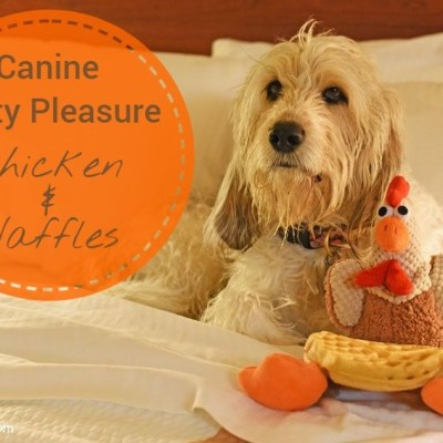 Canine Guilty Pleasure – Sweet & Savory #ChewyInfluencer