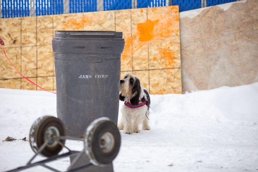 My GBGV LIfe Six Weeks Of Dog Sports - A Review And Highlights