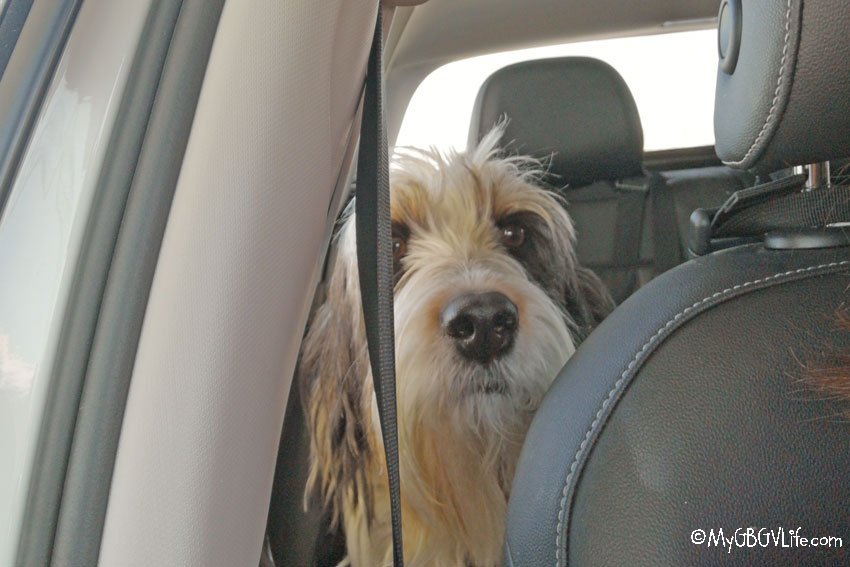 What Do Dogs Think About Road Trips?