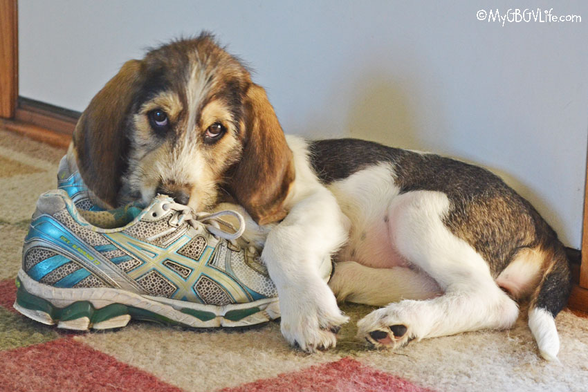 My GBGV Life 5 Tips For Running Safely With Your Dog This Spring