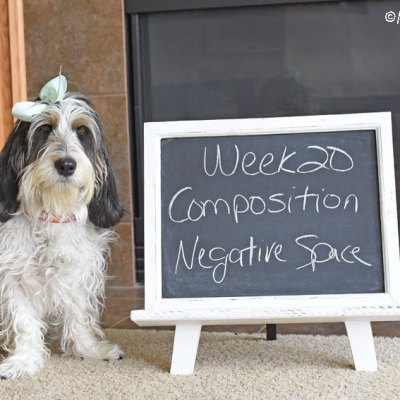 My GBGV Life Composition - Negative Space #DogwoodWeek20