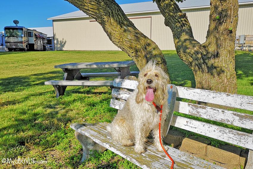 My GBGV Life Bailie on a bench