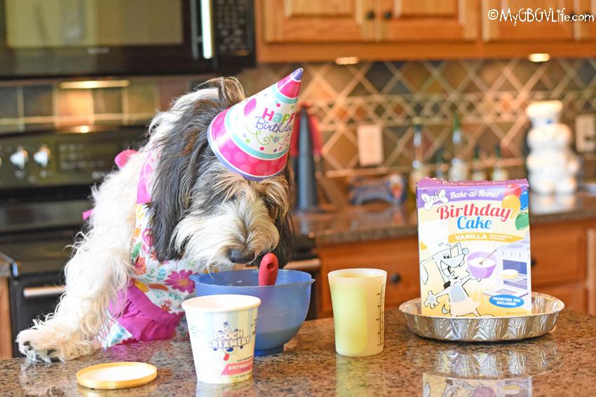 My GBGV Life dog ice cream mix