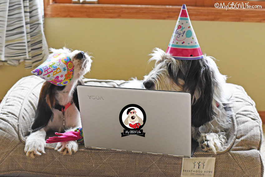 My GBGV Life canine party planners